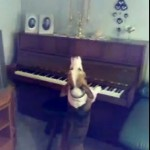 Beagle plays Piano and Sings