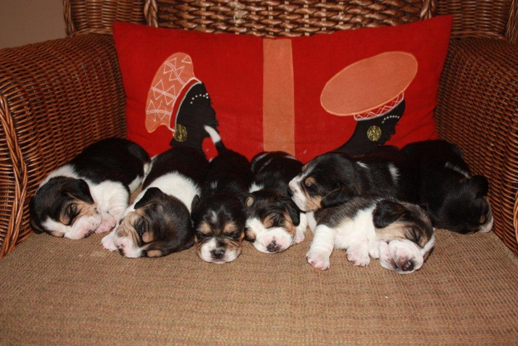 Pups for sale – Rustenburg