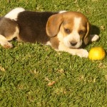 Female pups for sale – JHB