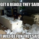 """Get a beagle"" they said!"