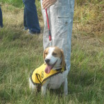 KZN beagle hunt 24 March 2013