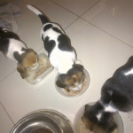 Pups for Sale – North West / Gauteng