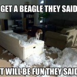 Have you been Beagled? (real life scenarios!)