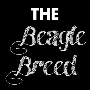 the beagle breed