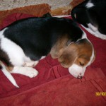 Puppies – NW province