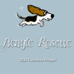 Beagle Rescue 2014-Calendar Project