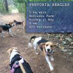 Beagle Walk – Pretoria