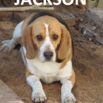 Jackson & Honey looking for a forever home