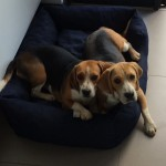 ADOPTION: Layla & George looking for a forever home
