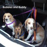 ADOPTION: Bubbles & Buddy