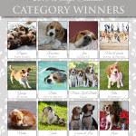 Calendar Competition Winners