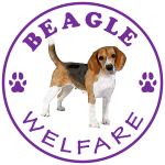 Beagle Welfare now a MySchool Beneficiary and other news