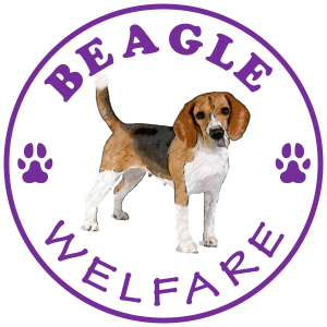 Beagle Welfare-transparent background-2-1