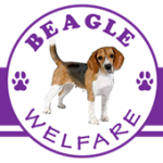 Beagle Welfare as MySchool Beneficiary