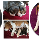 Pups for Sale – Noordhoek